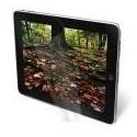 3M Protector de pantalla natural tablet (Universal